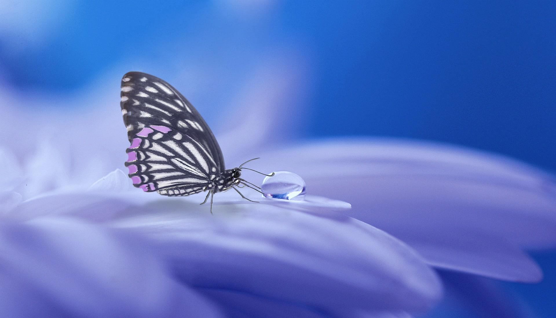 Papillon sur pétale