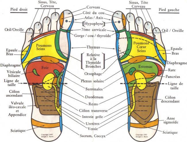 Schéma des points sur les pieds utilisés en réflexologie