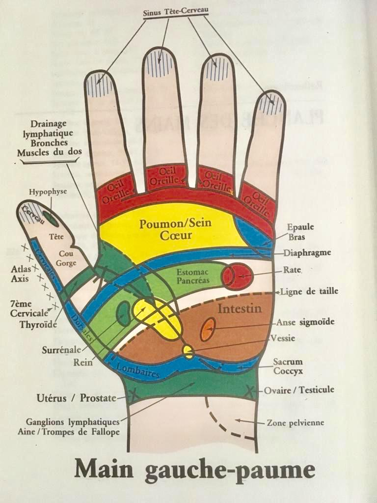 Schéma des points sur la main gauche utilisés en réflexologie